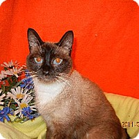 Adopt A Pet :: KADEN - Powder Springs, GA