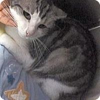 Adopt A Pet :: Gypsy - St. Petersburg, FL