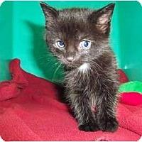 Adopt A Pet :: Doc - Secaucus, NJ