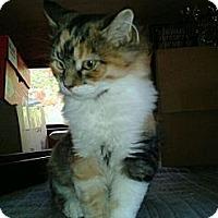 Adopt A Pet :: Doodlebug - Acme, PA