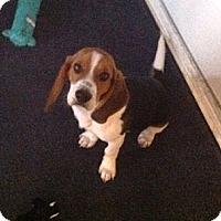 Adopt A Pet :: Logan - Novi, MI