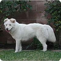 Adopt A Pet :: LUNA - dewey, AZ