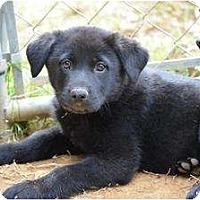 Adopt A Pet :: Greta - New Boston, NH