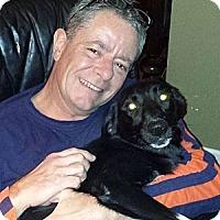 Adopt A Pet :: Taffy - Marietta, GA