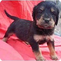 Adopt A Pet :: Huette - Staunton, VA