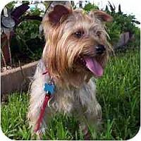 Adopt A Pet :: Simon - West Palm Beach, FL