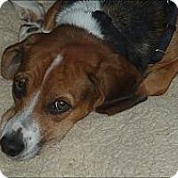 Adopt A Pet :: JANINE - Raleigh, NC