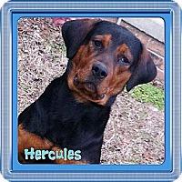 Adopt A Pet :: Hercules - Somers, CT
