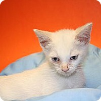 Adopt A Pet :: DAMIEN - SILVER SPRING, MD