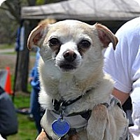 Adopt A Pet :: Spike - Grafton, MA
