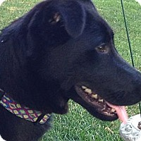 Adopt A Pet :: *Winnie - PENDING - Westport, CT