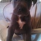 Adopt A Pet :: Frank S
