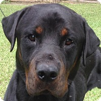 Adopt A Pet :: Bandit - Alachua, GA