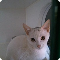 Adopt A Pet :: Powder - Caistor Centre, ON