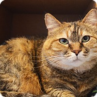 Adopt A Pet :: Mimi - Lincoln, NE