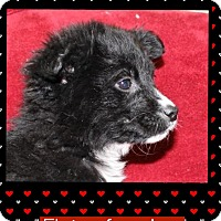 Adopt A Pet :: Eloisa (Pom-Erin) - Hagerstown, MD