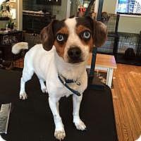 Adopt A Pet :: Buddy - Ardsley, NY