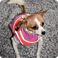 Adopt A Pet :: Chiquita - Danbury, CT