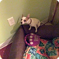 Adopt A Pet :: Lily - Clermont, FL