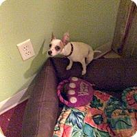 Adopt A Pet :: Lily - Tavares, FL