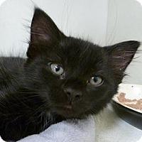 Adopt A Pet :: Edward - Massapequa, NY