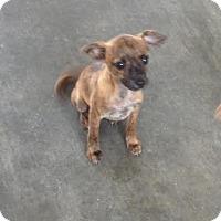 Adopt A Pet :: Nod - Blountstown, FL