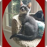 Adopt A Pet :: Zachary - Mt. Prospect, IL