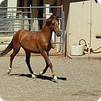 Adopt A Pet :: Luke - El Dorado Hills, CA
