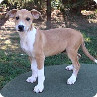 Adopt A Pet :: Moppet - Saratoga, NY