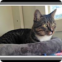 Adopt A Pet :: Otis - Tombstone, AZ