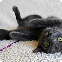 Adopt A Pet :: I'M BECCA! I'M A SILLY LOVEBUG! - jacksonville, FL