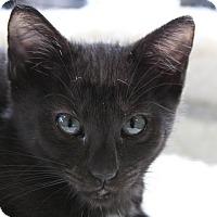 Adopt A Pet :: Michael - Sarasota, FL