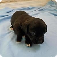 Adopt A Pet :: Marley - Fullerton, CA