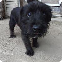 Adopt A Pet :: onyx - Zaleski, OH