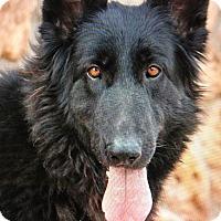 Adopt A Pet :: NYRA VON NIEMEGK - Los Angeles, CA