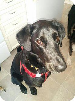 Retriever (Unknown Type) Mix Dog for adoption in Edmonton, Alberta - Rebel