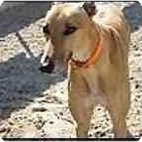 Adopt A Pet :: Frank - St Petersburg, FL