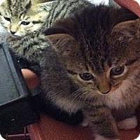 Adopt A Pet :: Ella - Island Park, NY