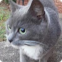 Adopt A Pet :: Rue - Monroe, GA