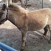 Adopt A Pet :: Donte - Malvern, IA
