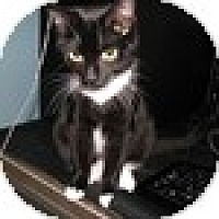 Adopt A Pet :: Blackbird - Vancouver, BC