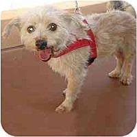 Adopt A Pet :: Charlie - Homestead, FL
