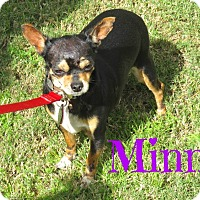 Adopt A Pet :: Minni - Scottsdale, AZ
