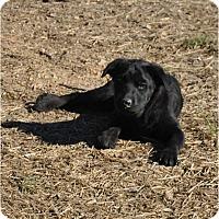 Adopt A Pet :: BrooklynIN CT - Manchester, CT