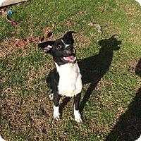 Adopt A Pet :: Cha Cha - Virginia Beach, VA