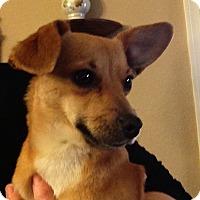 Adopt A Pet :: Mandy - Tucson, AZ