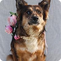 Adopt A Pet :: Hazel - Loomis, CA