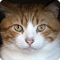 Adopt A Pet :: Orson - Sarasota, FL