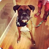 Adopt A Pet :: Dexter 2 - Woodinville, WA