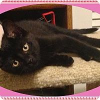 Adopt A Pet :: Dawn - Mt. Prospect, IL